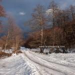caza en rumania (14)