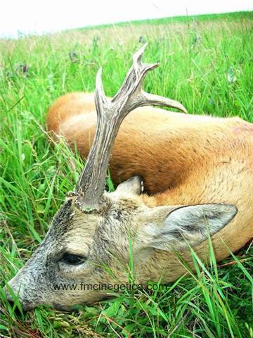 caza en rumania (2)