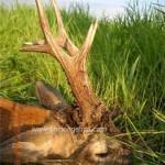 caza en rumania (21)