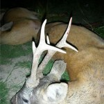 caza en rumania (39)