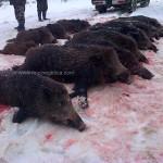 caza en rumania (5)