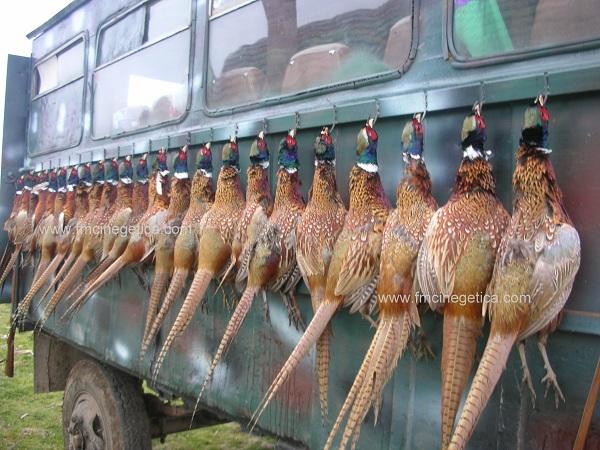 caza en rumania (55)