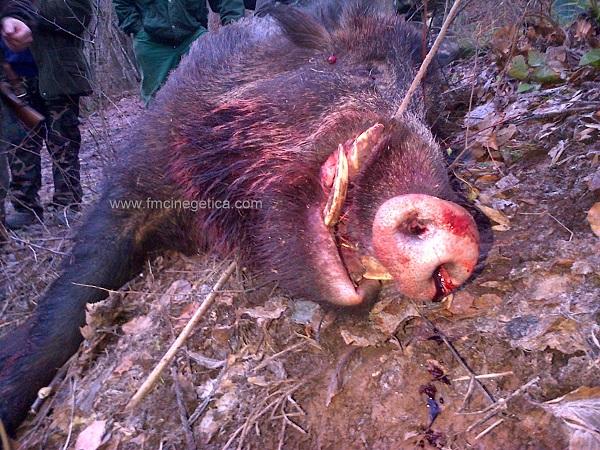 caza en rumania (56)