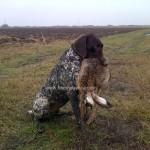 caza en rumania (57)